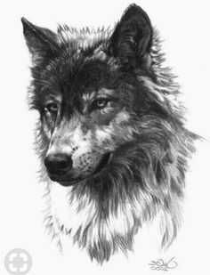 25 Tribal Wolf Chest and Shoulder Tattoo Ideas for 2020 - Do It Before Me Small. - 25 Tribal Wolf Chest and Shoulder Tattoo Ideas for 2020 – Do It Before Me Small Wolf Tattoo Idea - Wolf Tattoo Design, Tattoo Designs, Wolf Design, Small Wolf Tattoo, Tattoo Wolf, Wolf Tattoo Back, Wolf Tattoo Tribal, Tattoo Animal, American Traditional Rose