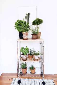 Diy plant shelf new 36 diy plant stand ideas for indoor and outdoor decoration of diy Ideas Terraza, Diy Plant Stand, Plant Stands, Plant Shelves, Cactus Y Suculentas, Deco Design, Green Life, Green Plants, Indoor Plants