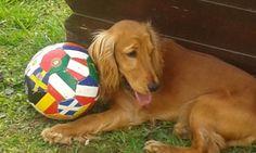 Puci- La mia palla