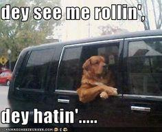Ridin Dirty Funny Meme : Oh papa bear dirty funny