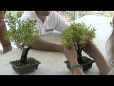Bonsai Trees-Best Lecture to learn from-6