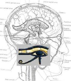 The eye of Horus/ eye of Ra and the connection to the pineal gland.