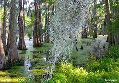 Foggy bottom swamp monster