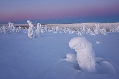 Though they look alien, these photos by Niccolo Bonfadini actually feature snow-covered trees near the Arctic Circle. Lappland, Transformers, Ghost Images, Snow Covered Trees, Snow Trees, Alien Planet, Alien Worlds, Tree Photography, Stunning Photography