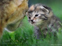 First step by Zoran Milutinovic (ZoranPhoto) on 500px.com