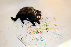 Little Ferret Art! She set him in the bathtub with paper & food coloring & let him walk around on it.
