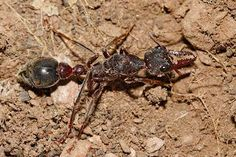 В Австралии заблудившийся турист 3 недели питался насекомыми http://agentoff.net/strany/avstralija/novosti-avstralii/v-avstralii-zabludivshiisja-turist-3-ned.html
