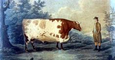 The time VT and NH went to war over cows.  The War of 1812 was caused by many things. In Northern New Hampshire and Vermont it was about cows.