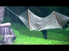 Baby bear caught playing on hammock