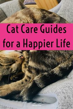 Want to make your cat happy? Feed your cat better? Be more organized with your cat's needs? Check out this page full of the best of the best! I've got youtube video tutorials, cat supplies top picks, printables, shirts, and a cat food label cheat sheet. Check out this page full of all cat care needs today! Kitten Food, Kitten Care, Cat Care Tips, Pet Care, Healthy Cat Food, Cat Health Care, Getting A Kitten, How To Cat, Living With Cats