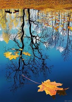 Tree Reflection in the Blue Water with Yellow Fall Leaves