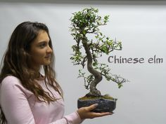 Miami Tropical Bonsai is one of the largest bonsai companies in the United States. We have over bonsai trees in stock, handmade bonsai pots, bonsai tools Bonsai Tools, Bonsai Art, Bonsai Garden, Chinese Elm Bonsai, Bougainvillea Bonsai, Wonder Art, Tree Centerpieces, Wonders Of The World, Miami