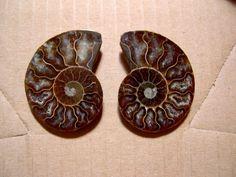 VERY NICE NATURAL AMMONITE SPLIT 55mm  madagascar split ammonite fossil , fossils