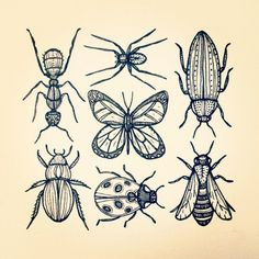 beetle tattoo designs - Google-haku