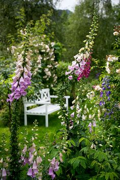 A bench with a view of Foxgloves. That will do nicely, for me.   B r a t t e B a k k a