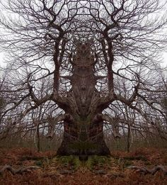 "HOAX ... This one is an obvious mirror image to form a ""Totem Tree""...  pretty kewl tho"