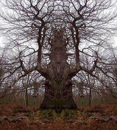 Very Strange Tree