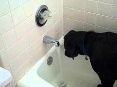 Smart Labrador Retriever figures out how to start bath (VIDEO) » DogHeirs | Where Dogs Are Family « Keywords: Labrador Retriever, bathtub, water