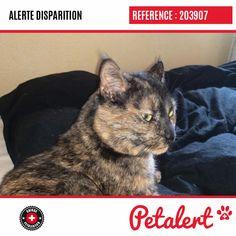 Cette Alerte (203907) est désormais close : elle n'est donc plus visible sur la plate-forme Petalert Suisse. Nous avons retrouvé notre animal Merci pour votre aide. Visible, Aide, Cats, Switzerland, Thanks, Shape, Animaux, Gatos, Cat