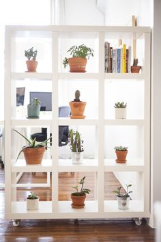 thesill:  makeshift 'plant wall' in ofakind's NYC headquarters...