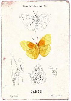 Yellow butterfly, 28,8 cm x 20,1 cm  www.madamea.no