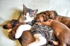 Happy Sunday Snuggles, y'all!