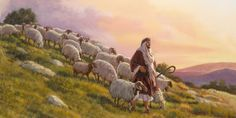 """Sheep follow a shepherd down a hillside. John 10:26-28: """"...you do not believe, because you are not my sheep. My sheep listen to my voice, and I know them, and they follow me.I give them everlasting life..."""""""