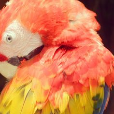 Did you know that Xcaret has one of the most successful macaws breeding programs in Mexico and the world?