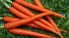 Scarlet Nantes is a relative newcomer to many parts of the world, and its reputation has grown fast. This medium sized carrot is not only easy to grow, but it's very delicious as well. Put a few into a juicer and see for yourself!