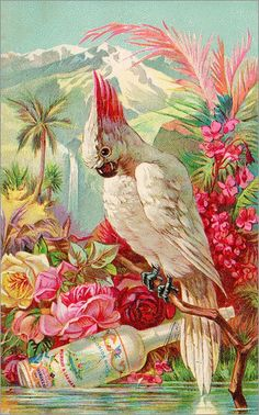 "Cockatoo advertising trade card for ""Florida water,"" circa Victorian era. Florida water was an American-made perfume, NOT booze . this is a nicely-scented tropical bird, not a drunk one. Images Vintage, Vintage Cards, Vintage Postcards, Art And Illustration, Illustrations, Florida Water, Retro Poster, Bird Art, Vintage Prints"