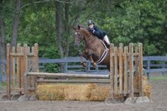 Rob Gage loves this horse's knees, but gives the rider tips to be less distracting to the ride!
