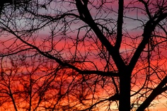 love bare tree branches