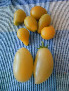 That Bloomin' Garden: Loving Tomatoes!