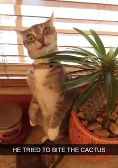Funny Cats #cats #rosaforlife