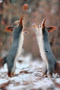 Tip Off #Squirrels #Basketball #TinCanApparel