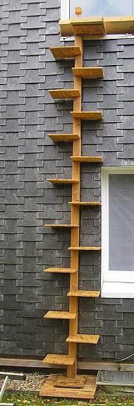 Exterior Wall Ladders : Images about cats kitty humor on pinterest