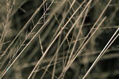 Day 216 - Dry grass