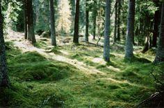 . #nature