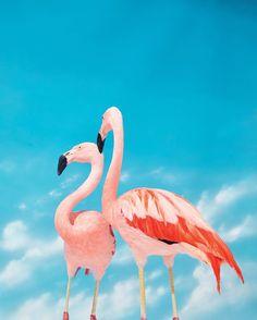 Do you speak J.Crew? Wild Flamingo adj. \wahyld fluh-ming-oh\ Not just pink. #speakjcrew