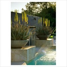 how pretty would these be on the entrance to the ranch Richards Stewart Pool Water Features, Water Features In The Garden, Garden Features, Succulents In Containers, Succulents Garden, Garden Pool, Water Garden, Outdoor Pots, Outdoor Gardens