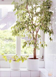 an indoor tree