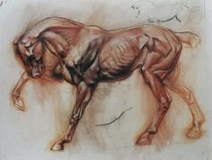 Nicely done horse anatomy rendering. Horse Anatomy, Animal Anatomy, Horse Drawings, Animal Drawings, Horse Artwork, Horse Sculpture, Animal Sketches, Equine Art, Art Design