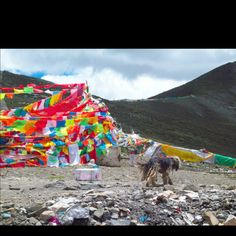 Tibet is a place to be in November.....