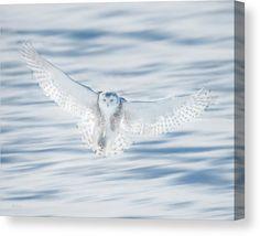 Phyllisburchettphoto Canvas Print featuring the photograph Angel Wings by Phyllis Burchett #