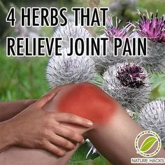 4 Amazing Herbs That Naturally Relieve Joint Pain. Herbs can be used to treat inflamed joints, cleanse the blood, and improve general health.