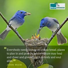 These words by naturalist and environmental philosopher, John Muir in his book, 'The Yosemite', describe how all living beings experience different phases in life. While looking forward to brighter days of play and beauty, strengthen yourself with the lessons learnt from the days past.  #DiversityofLife #MotivationMonday #Conservation #Dilmah #NoCompromise #DilmahConservation #LoversofLife #motivationalquotes #Mondaymotivation #inspire #interconnected #inspirationalquotes #JohnMuir