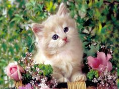 cute cats and kittens   Cute Cats Image Gallery: Cute Cats And Kittens