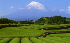 Green Farmland, Mount Fuji