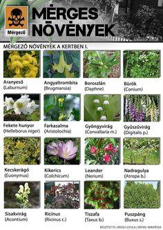 Buxus, Nerium, Good To Know, Landscape, Plants, Bear Grylls, Herbalife, Wordpress, Gardening