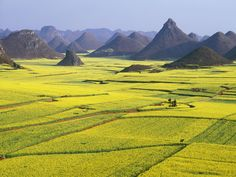 The Most Colorful Places on Earth - Luoping County, China    Once a year, China's Luoping County transforms into a seemingly endless sea of yellow flowers. The bright fields of canola (the plants that make the cooking oil of the same name) bloom in February and March, giving the area of Yunnan an undeniably sunny feel for two months out of the year.
